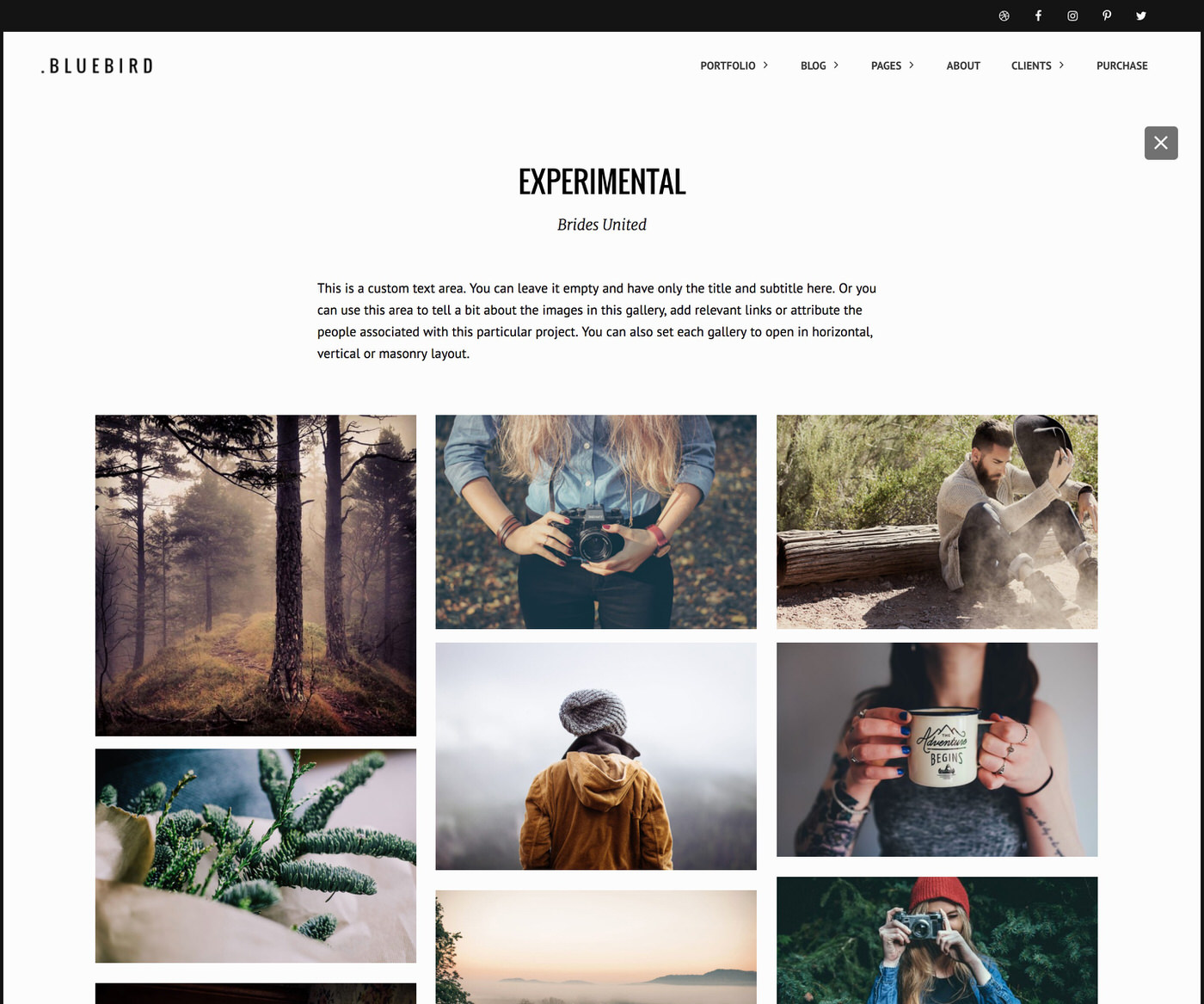 Bluebird photography theme with masonry gallery and text