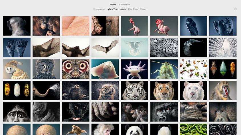 26 Photography Portfolio Examples for Inspiration | Colormelon